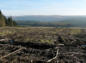 clearfell (clearcut) site, Ireland