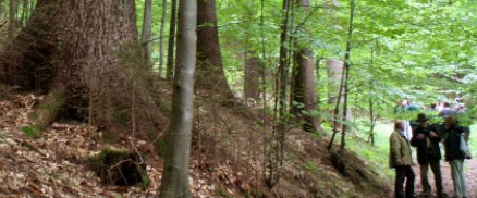 A Slovenian permanent forest - where clearfelling (clearcutting) has not been performed for 64 years!