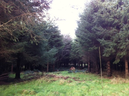 Paddy was saying this clearing will be completely overgrown by the conifers in 5 years!!! He suggested it was a great place to bring in new species and suggested trying Beech and Western Red Cedar but not to plant too closely at all to the conifers which create so much shade and would slow the new trees growth.