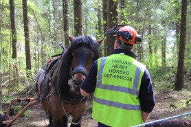 Tom Nixon has been buidling up lots of interest in horse logging over recent years. For small woodlands, horses limit the damage to the forest floor and tree roots.