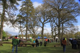 Beautiful trees at Stradbally. We were so delighted that David Wilkinson Director of the Irish Forestry Woodland & Bio Energy show was so enthusiastic about the Greens lauching their Forest Policy at this growing national event