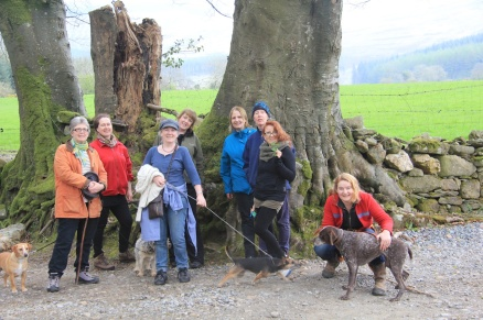 Wonderful beech trees line the upper part of the lane and the fun of dog and human group photos.