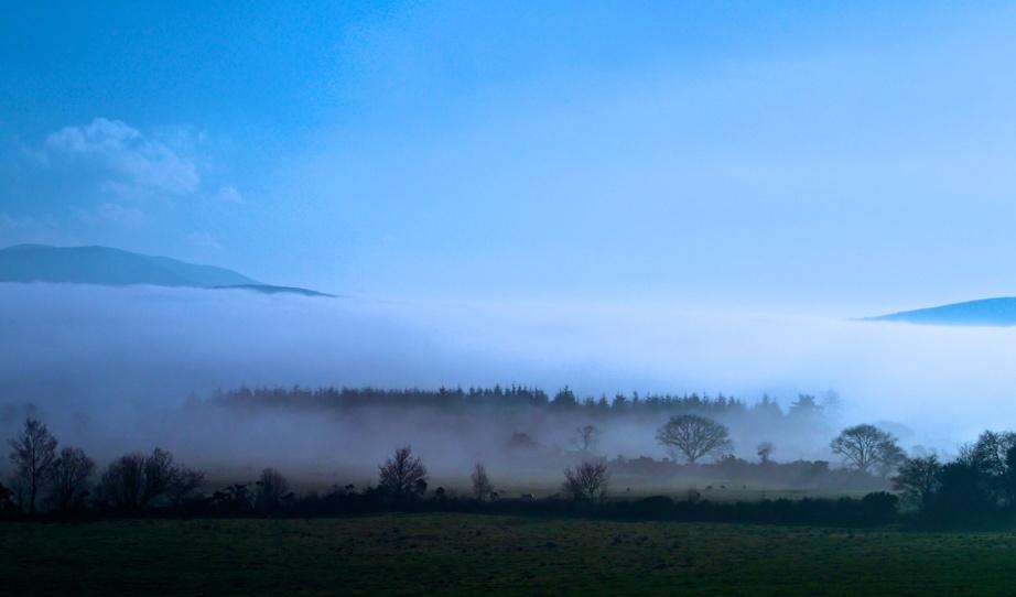 Hollywood soaking up the winter mist. Photo: Martin Lyttle, January 2015.