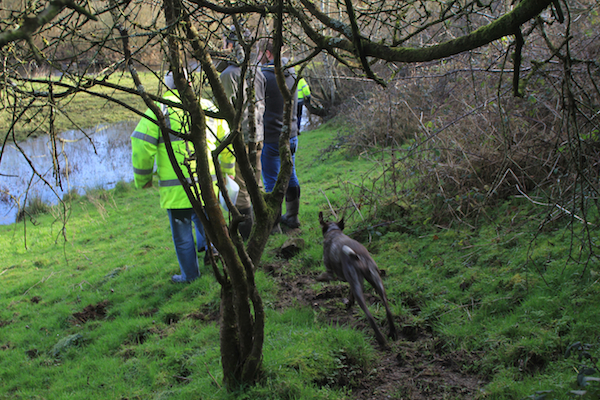 Holly charging around Fritz' site on our visit to hear his plans on planting a woodland
