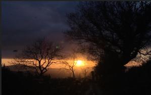 Dawn of the Symbiocene, Photo: Cathy Fitzgerald, 2019