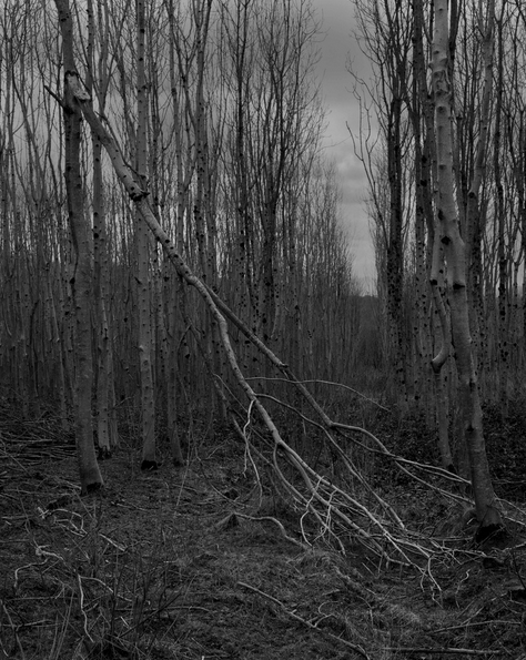 One of the new photographic images by Sara Flynn for the upcoming New Works Ireland exhibition in which she explores the devastating Ash dieback disease affecting one of Ireland's most loved native trees.